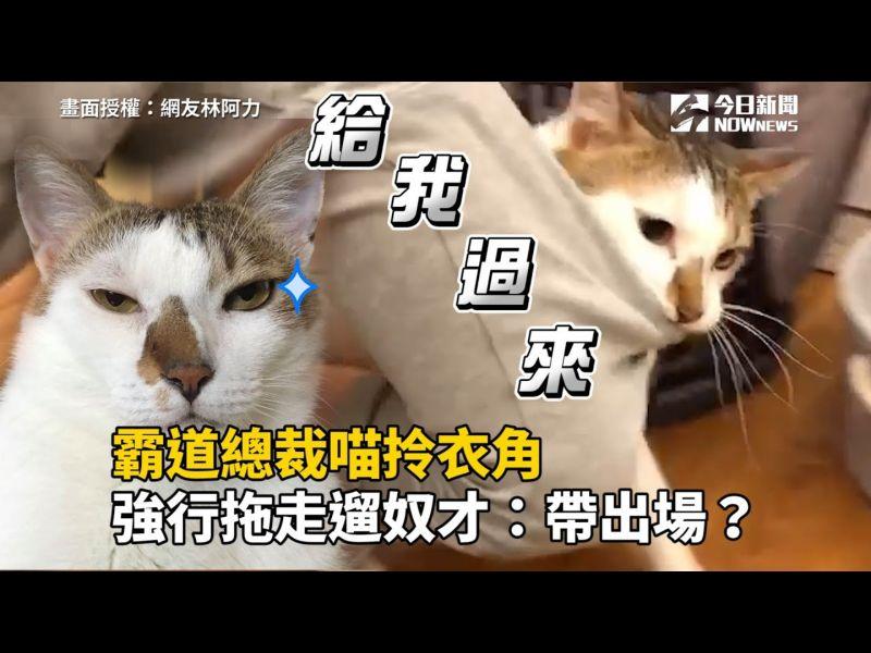 影/霸道總裁喵拎衣角 強行拖走「遛奴才」:到底要去哪?