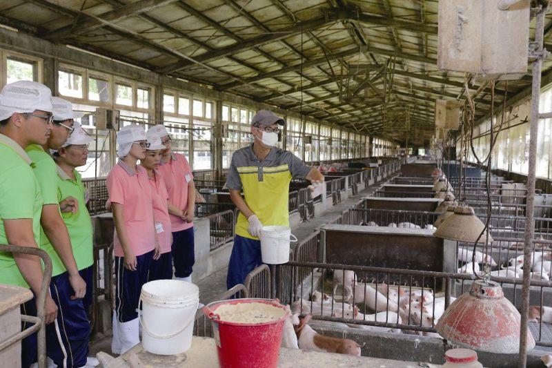 ▲台糖畜殖事業部副執行長溫元文指出,東南亞市場絕對是台灣豬外銷的利基市場,因為飲食習慣相近,且距離也近是其他國家無法取代的。圖為台糖畜殖場實作課程。(圖/台糖提供)