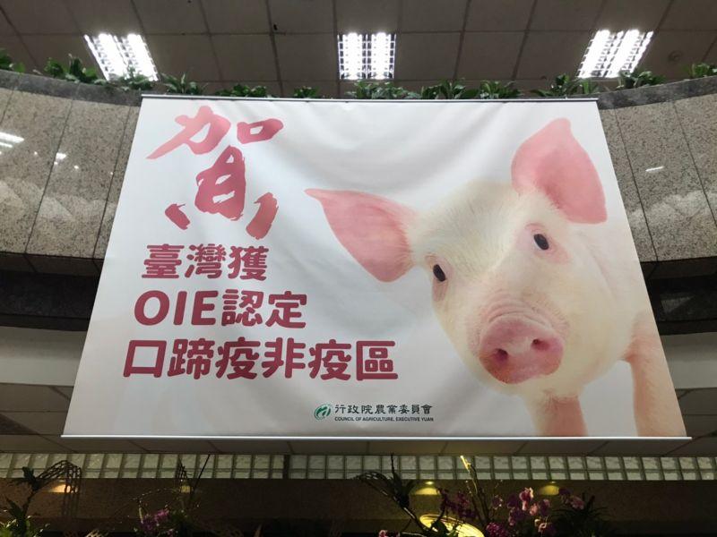 ▲農委會於6月16日宣布,台灣成為口蹄疫「不施打疫苗非疫區」,台灣與口蹄疫奮戰24年之後,終於能重返國際肉品市場。(圖/賴志昶攝)