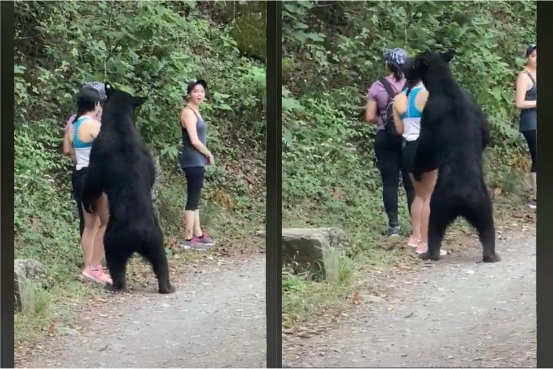 ▲黑熊從後抱向女子(圖/翻攝自TikTok「PonchoDeNigris」)