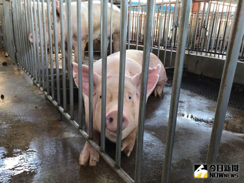 台豬、美豬標示怎麼分?陳時中下周親赴迪化街示範