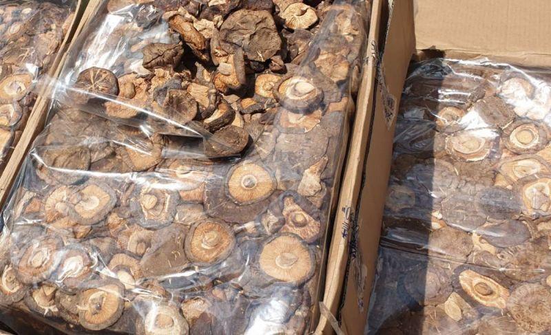 ▲進口貨櫃夾藏乾香菇。(圖/記者黃守作攝,2020.07.27)