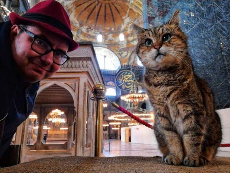 千年古蹟改清真寺眾憂鎮館之貓處境 當局表態:好暖心