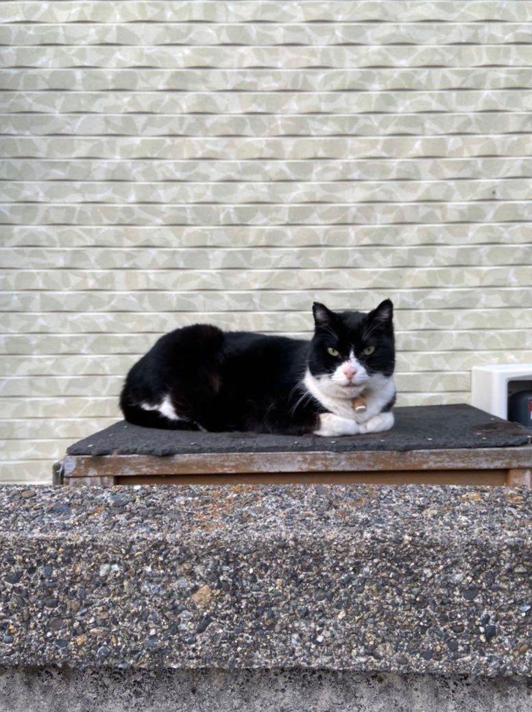 ▲給大家一點提示,這次要找的是這隻毛色有黑有白的賓士貓!(圖/Twitter@kitazawa1104)