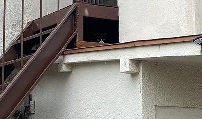 ▲答案揭曉!貓貓還真會躲~(圖/Twitter@kitazawa1104)