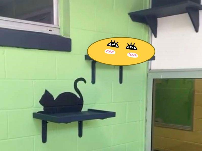 ▲收容所Pet Alliance of Greater Orlando裡的黑貓CC找到絕佳的地點把自己藏起來,似乎認為這樣就沒有人會發現。(圖/Caryn Morris)