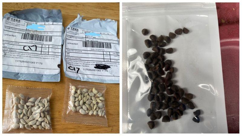 ▲美國多地近日收到不明種子包裹。(圖/翻攝自推特)