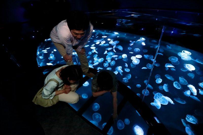 ▲水母就在腳下游動著,讓人有種站在海面上、飄飄然的奇妙錯覺。(圖/Twitter@Sumida_Aquarium)