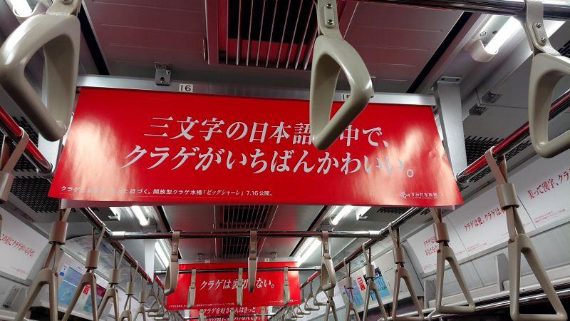 電車上洗腦式<b>水母</b>海報讓人難以忽視 水族館見真身:超美