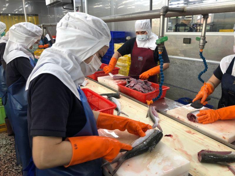 ▲全聯與台南虱目魚業者合作,捕撈後的虱目魚送往加工廠,由專業人員取下無刺魚肚。(圖/記者劉雅文拍攝)