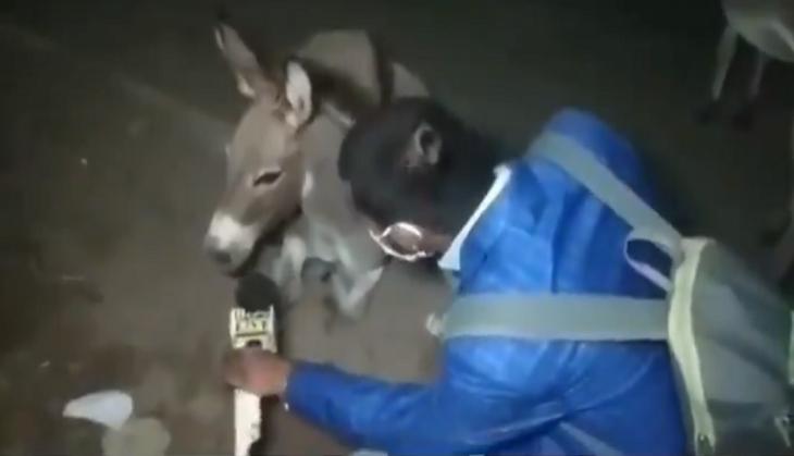 ▲印度一位記者問驢子「為什麼不戴口罩?」在網路爆紅。(圖/翻攝自Amit Kumar的臉書)
