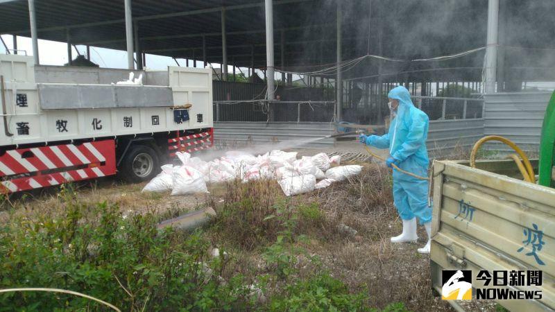 肉鵝場染禽流感