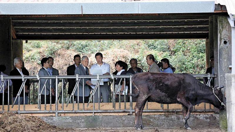 前總統李登輝相當關注「源興牛」的培育,圖為過去李登輝前往花蓮兆豐農場巡視,一旁負責「源興牛」培育計畫的辦公室主任王燕軍在旁說明。