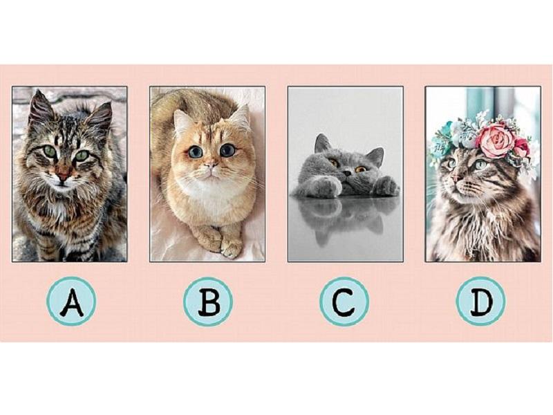 超準!直覺選哪隻貓會說人話?測你與生俱來何種「天賦」