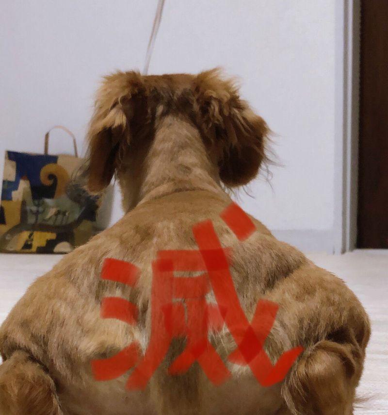 ▲日本網友分享的小狗背影照,意外激發改圖大戰。(圖/翻攝自@Kazu_nekogasuki的推特)