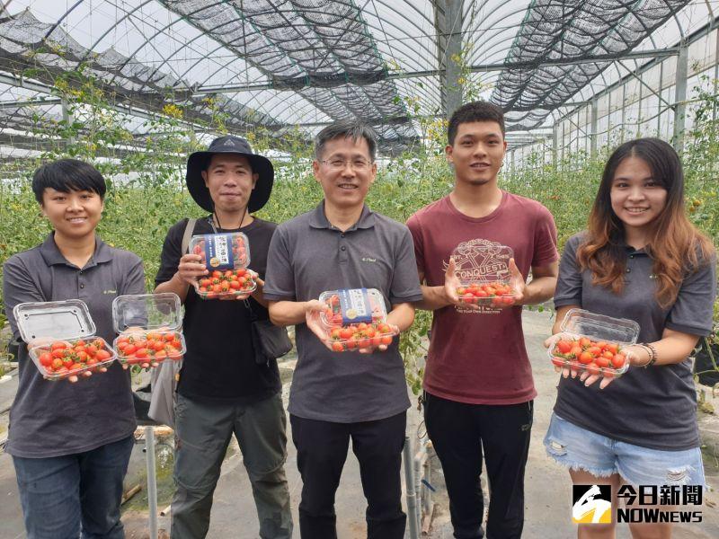 ▲智耕創新團隊繼首創低鉀蔬菜後,今天再宣布好消息,低鉀蕃茄月中即將上市,造福腎友及糖尿病患。