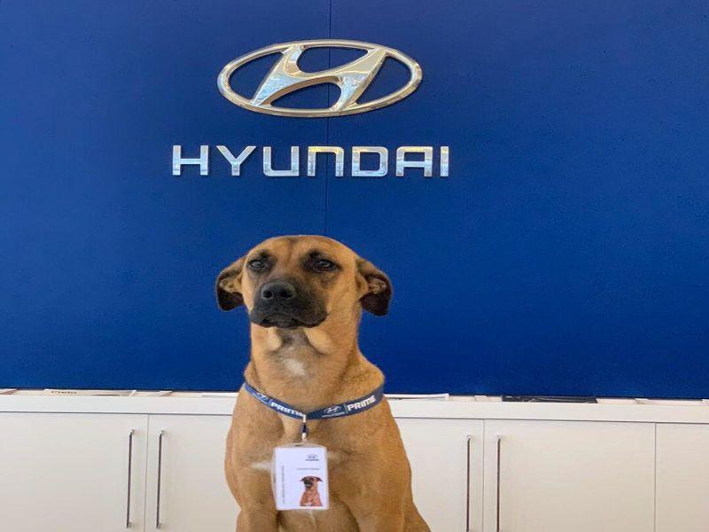 浪汪每天守門口接待客人 車公司正式聘牠做「銷售顧問」