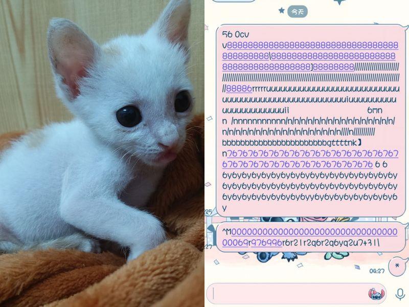 深夜驚覺愛貓傳送神秘喵星語給男友:誰是小三很清楚了!