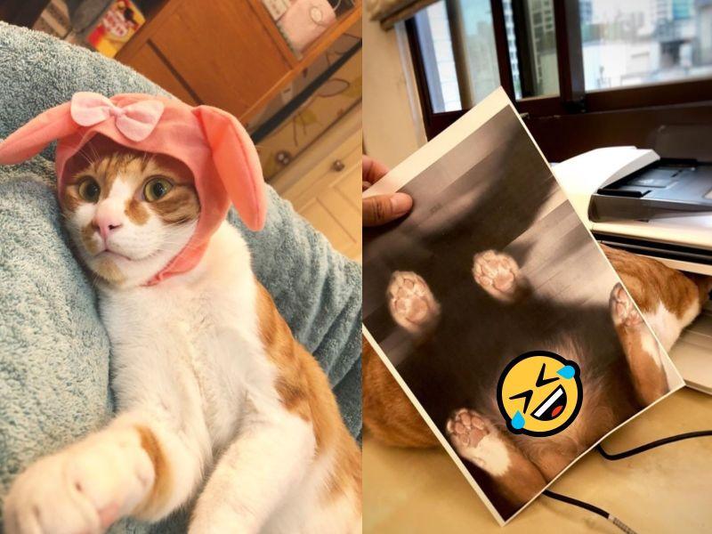 橘白貓佔領印表機他「按彩色列印」 網友笑:肚子有亮點!