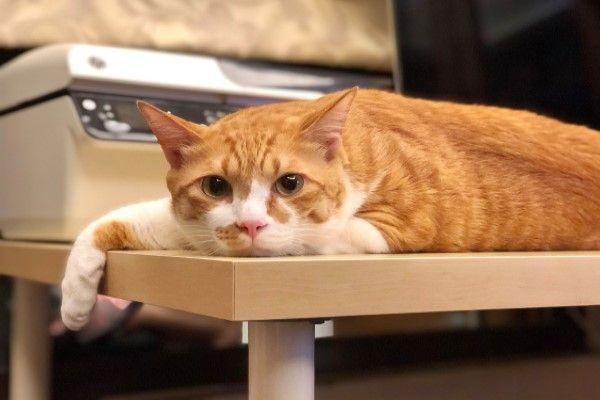 ▲橘白貓Mini因為霸占印表機被主人「彩色列印」,眼尖網友還發現圖片有驚喜亮點(圖/網友玖豪授權提供)