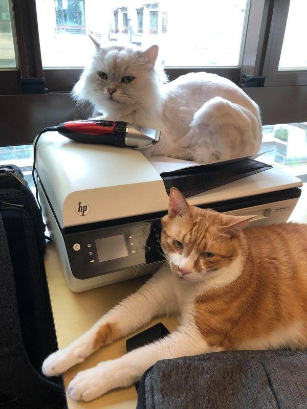 ▲平時會與弟弟一起占據把拔工作用的印表機(圖/網友玖豪授權提供)