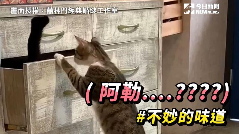 影/愛睏黑貓自行拉櫃溜進去 下秒竟慘遭豬隊友背叛!