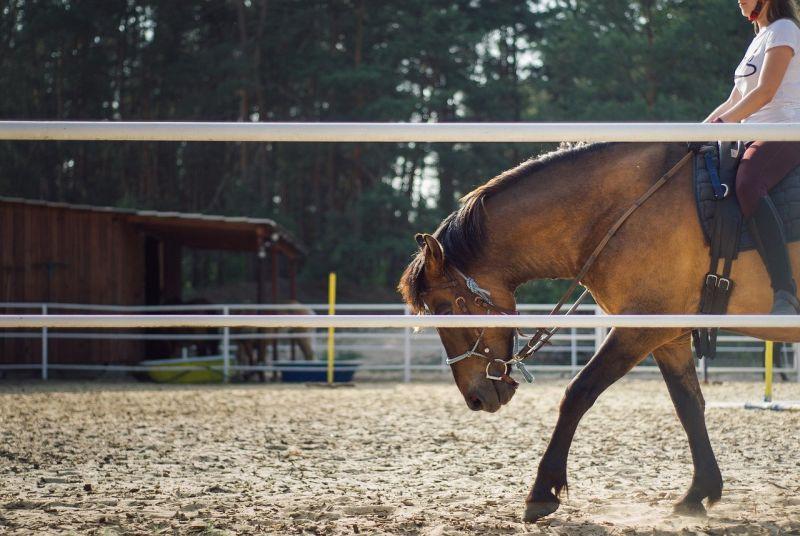 賣場驚見騎馬裝備!男不解「會馬術的人很少」 網曝真相