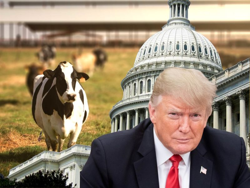 美台啟動FTA談判敲門磚 美豬美牛開放進口成關鍵