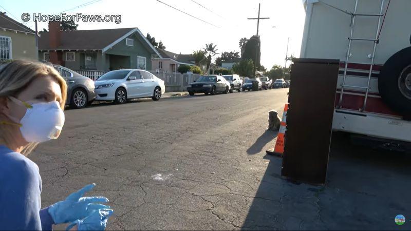 ▲動物救援小組接到民眾通報,街頭有一團髒髒小毛球。(圖/翻攝自YouTube@