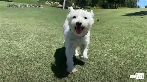 ▲將將!搖身一變可愛的小白狗~(圖/翻攝自YouTube@
