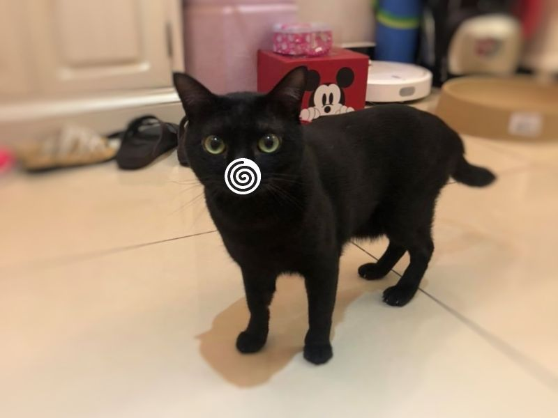 黑貓上完廁所就嘟嘴「鼻塞」 網笑瘋:這批很純!