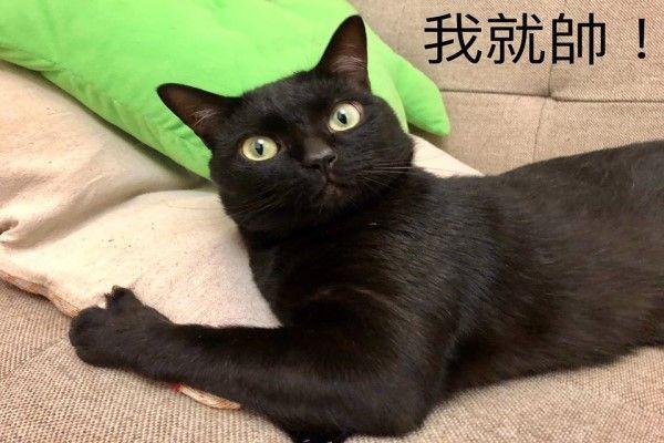 ▲小黑天:本喵認證,這批貓砂很純!(圖/網友Titan