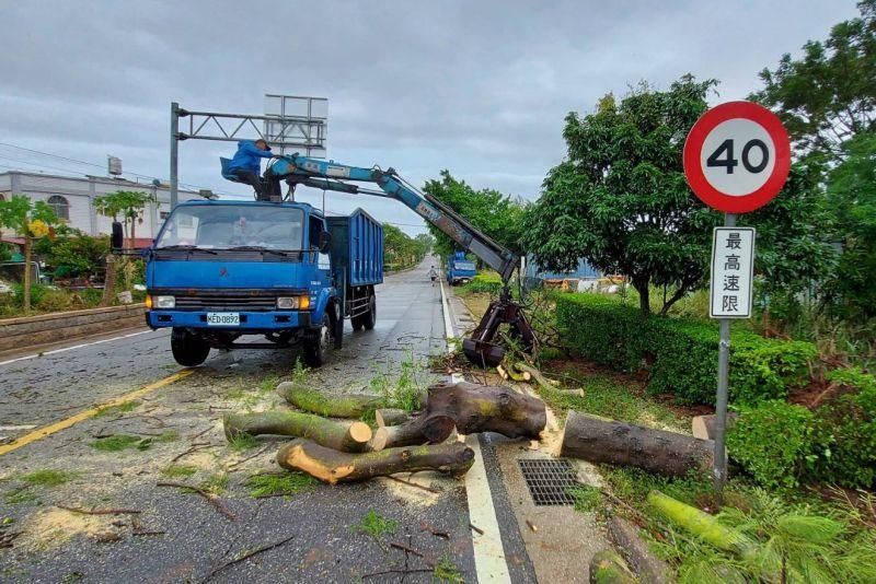 ▲受輕颱米克拉影響,金門全縣共有37處樹倒。(圖/金門林務所提供)