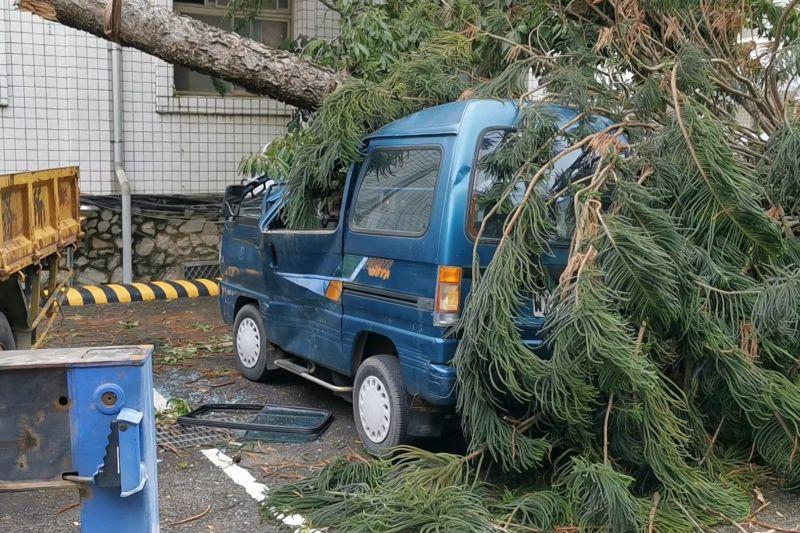 停放在金門縣政府的藍色麵包車遭倒塌的南洋松砸中