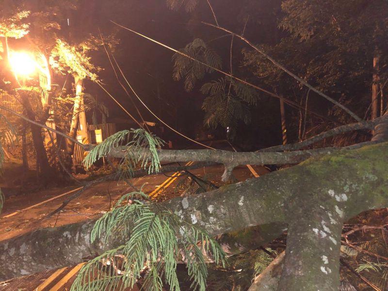 谷關夜晚大雨樹木倒塌車撞上 警方呼籲小心慢行