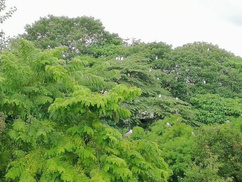 旱溪康橋計畫整治 保留生態兼顧防洪不同調