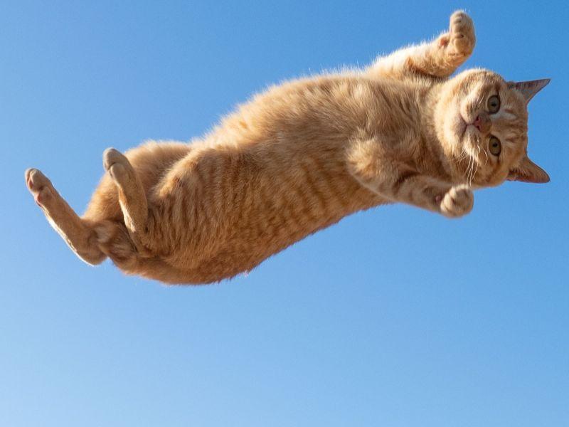 <b>攝影師</b>捕捉貓跳躍瞬間 橘貓懸在半空中「一臉看透喵生」