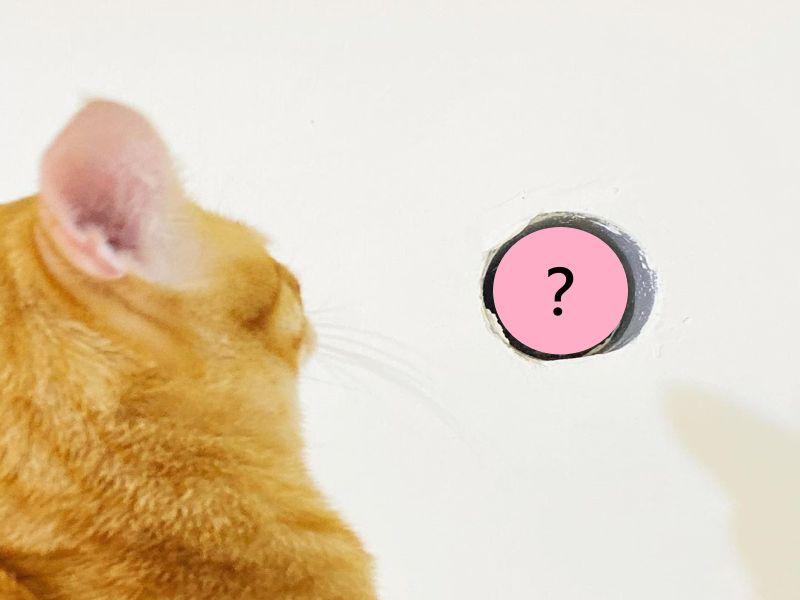 橘貓跳上衣櫃原來冷氣孔有「牠」 主人:羅密歐茱麗葉?