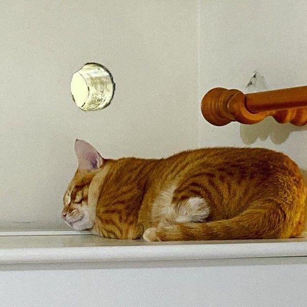 ▲橘貓阿金因為常常跳上衣櫃注視著牆壁引起主人注意,後來發現原來牆上有冷氣孔(圖/IG@meowgold1234授權提供)