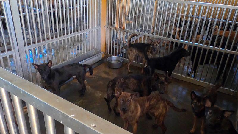 ▲澎湖縣流浪動物收容中心的犬貓超收比率已經接近2倍,所內死亡率也是全台最高。(圖/記者陳明安攝)