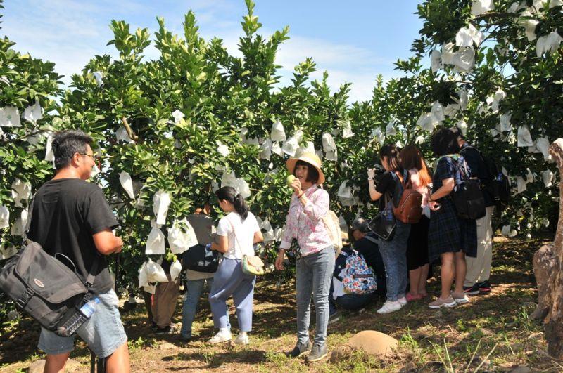 ▲今年文旦柚農遊體驗一日遊,以產地八里區為焦點。(圖/旅食樂提供)