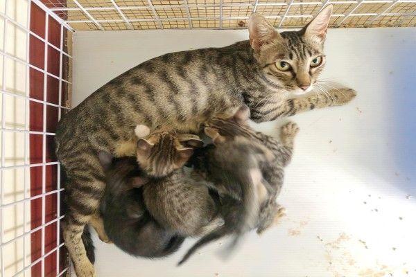 ▲Wun Chen去誘捕時虎斑媽媽已經產下5隻小奶貓(圖/網友Wun Chen授權提供)
