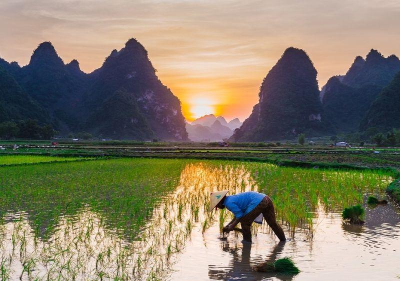 ▲新冠肺炎疫情肆虐,大大影響每個國家的糧食問題。近日,就有網友提出疑問「台灣為什麼不會有糧食危機」。(示意圖/翻攝自pixabay )