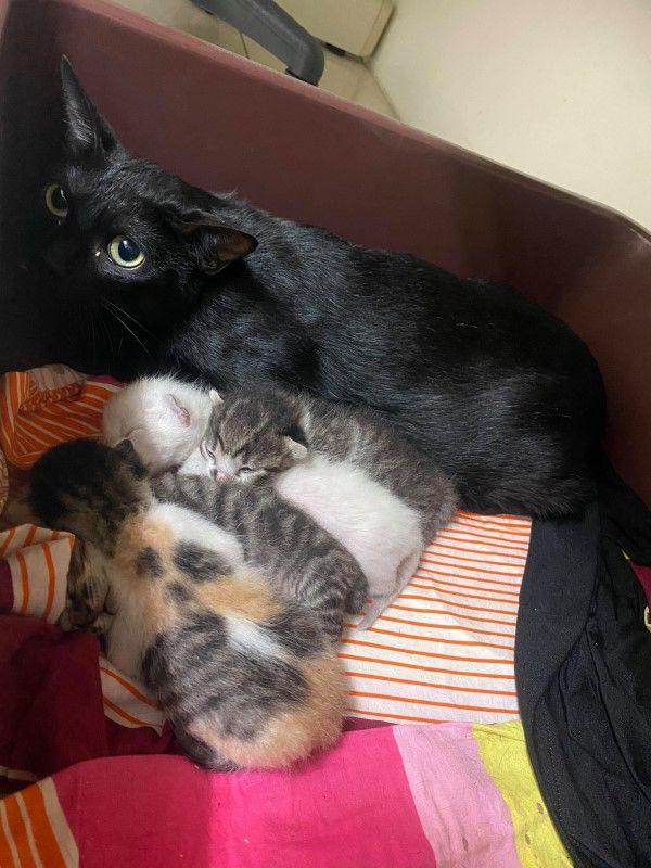 ▲過沒多久歐歐生下一窩小貓,四隻貓咪很巧妙地都是不同花色(圖/網友Yoshi
