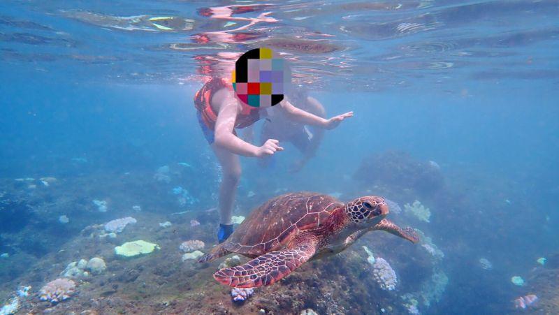 ▲海巡署南部分署第五岸巡隊小琉球安檢所接獲民眾報案於美人洞海域潛水時,發現一兒童疑有觸摸海龜情形。(圖/海巡提供)