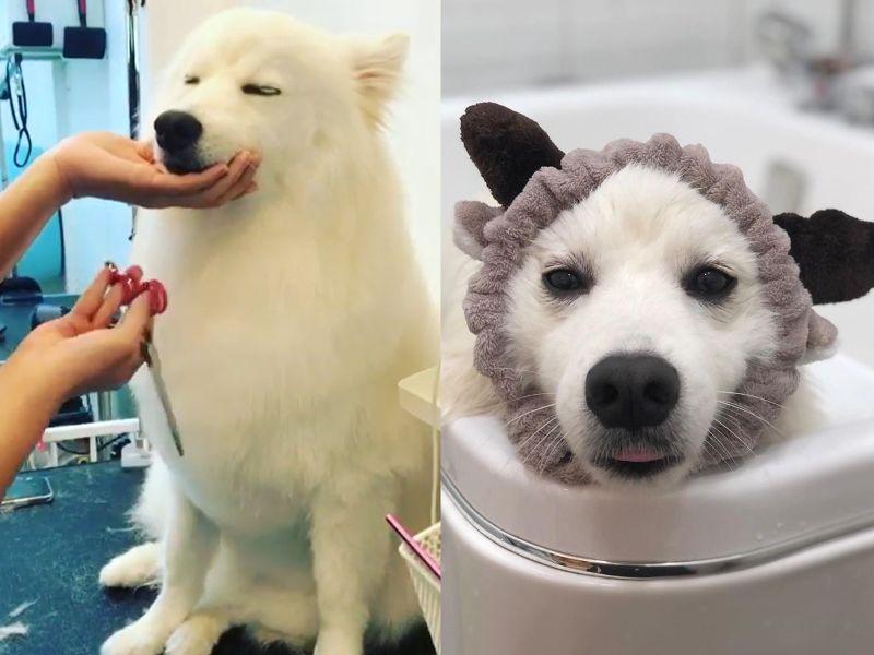 好命狗體驗頂級寵物SPA 白汪閉眼享受:好蘇湖~