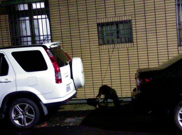 ▲網友透露因為鄰居養狗,每到晚上都會狂叫,讓他無法接受。(圖/翻攝PTT)