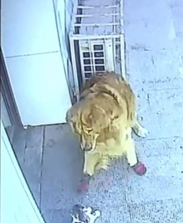 ▲狗狗則試圖擋住貓咪的去路。(圖/Facebook@The