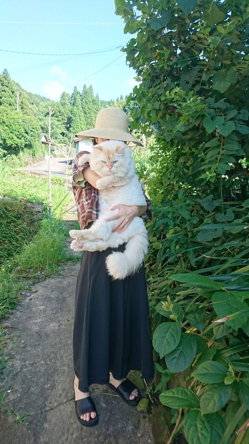▲這隻日本推主養的白貓名叫「白龍」。(圖/Twitter@WeUADL1Ws02osvw)