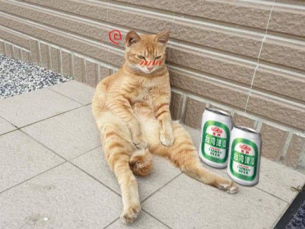▲網友直接發揮創意,幫牠P上啤酒罐,表示大叔貓其實是喝掛了還在宿醉(圖/翻攝自網友吳承鋒)